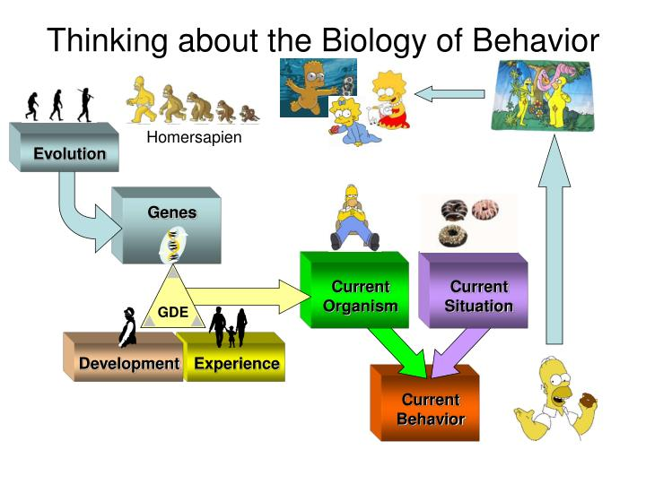 thinking about the biology of behavior n.