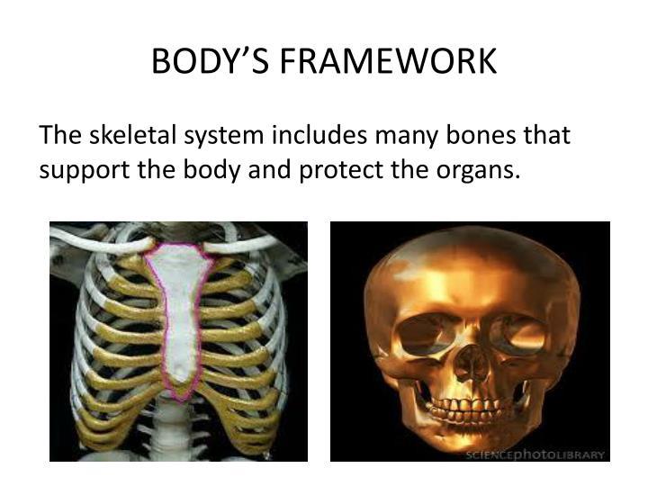 BODY'S FRAMEWORK