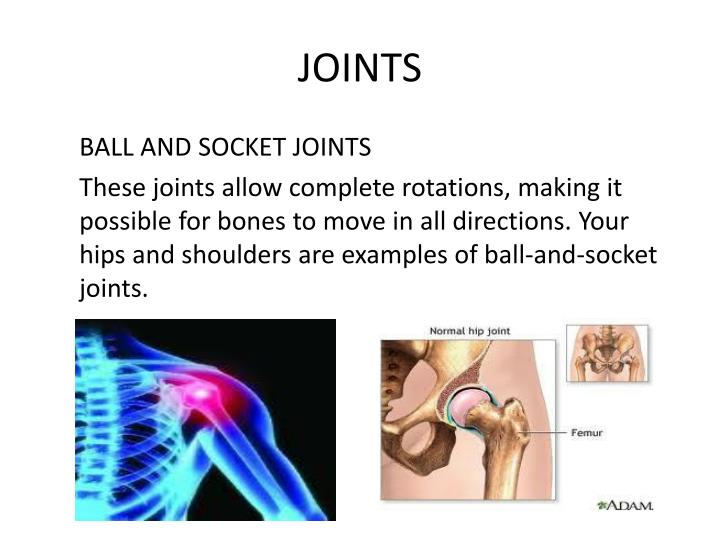 JOINTS