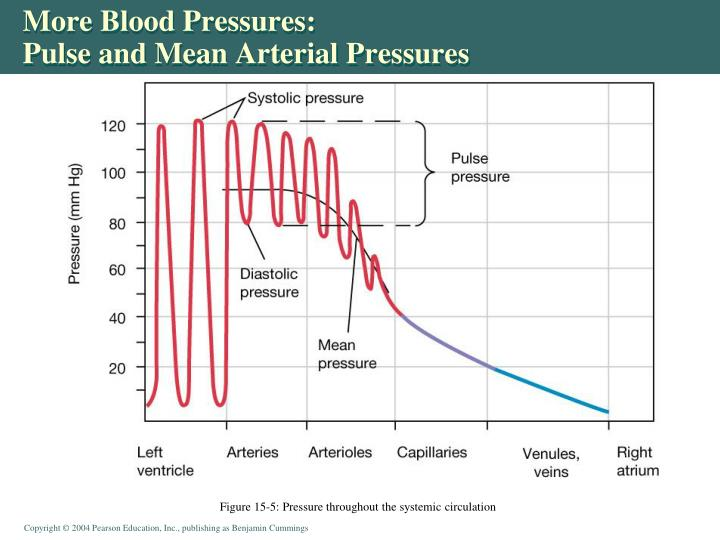 More Blood Pressures: