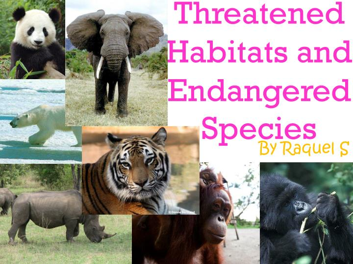 threatened habitats and endangered species n.