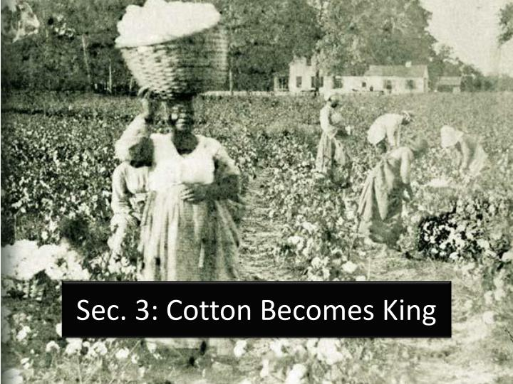 sec 3 cotton becomes king n.
