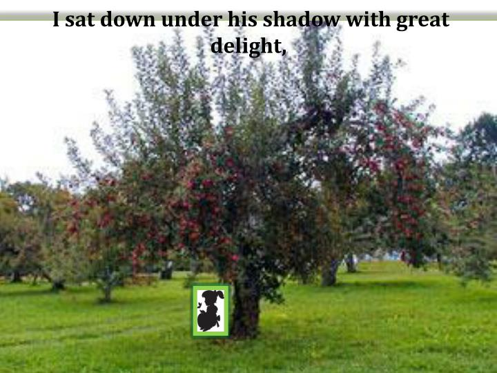 I sat down under his shadow with great delight,