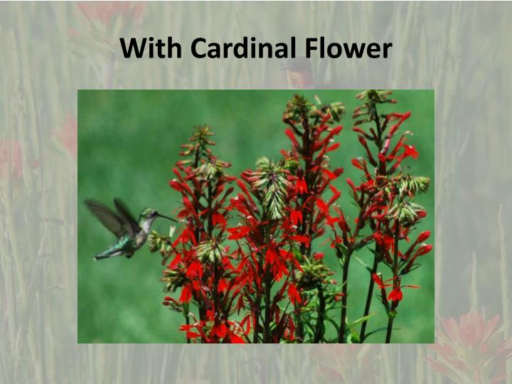 With cardinal flower