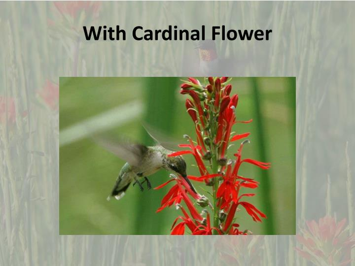 With cardinal flower1