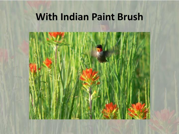 With Indian Paint Brush