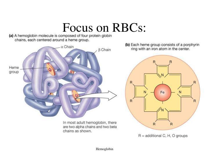 Focus on RBCs: