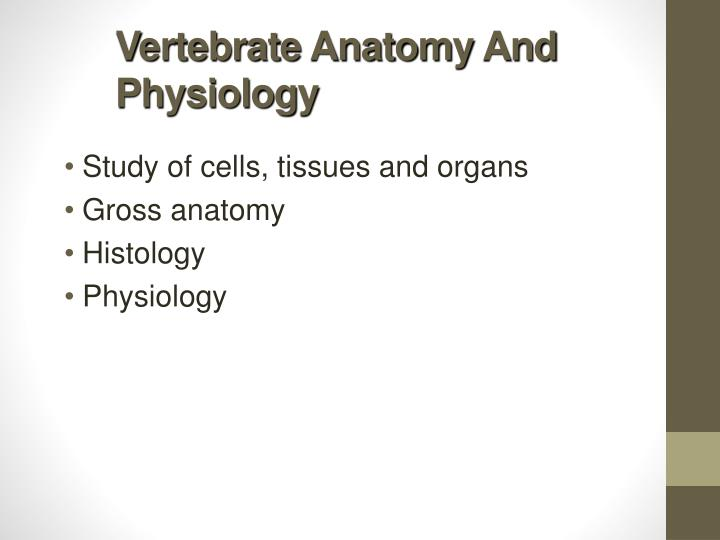 Vertebrate anatomy and physiology
