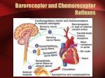 baroreceptor and chemoreceptor reflexes