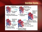cardiac cycle1