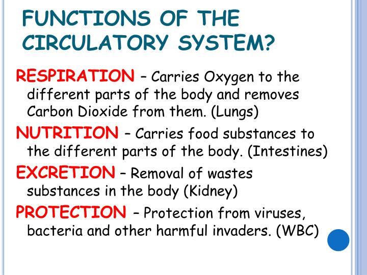 FUNCTIONS OF THE CIRCULATORY SYSTEM?