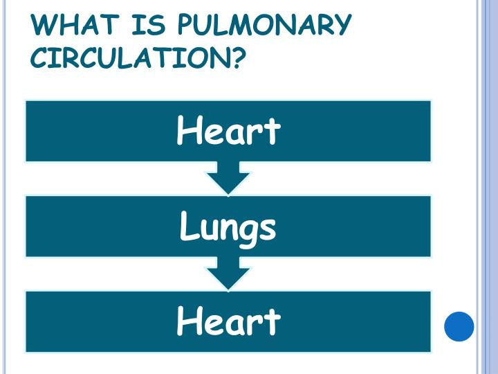 WHAT IS PULMONARY CIRCULATION?