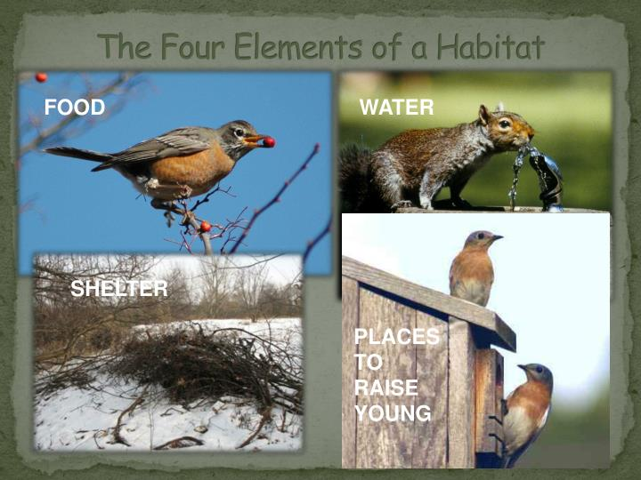 The Four Elements of a Habitat