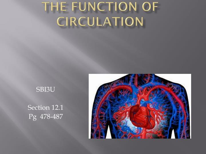 the function of circulation n.