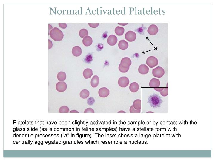 Normal Activated Platelets