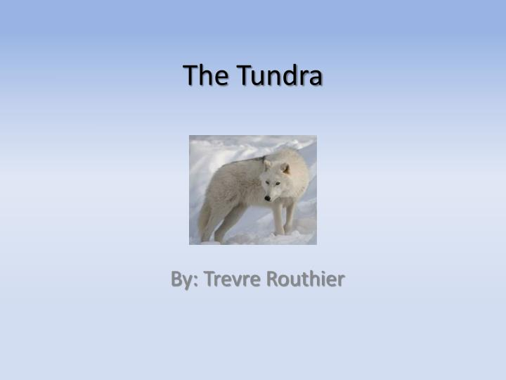 the tundra n.