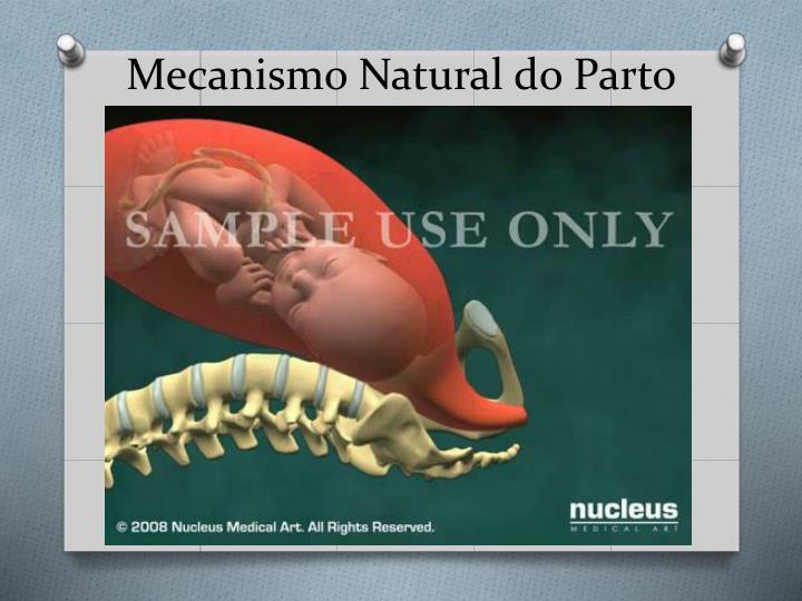 Mecanismo natural do parto
