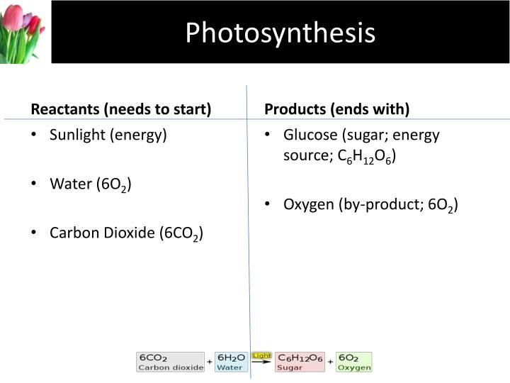 Photosynthesis2