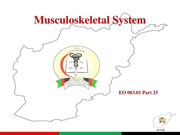 musculoskeletal system n.