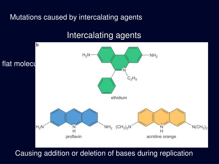 Mutations caused by intercalating agents