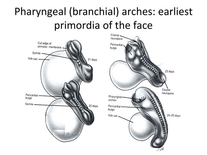 Pharyngeal (