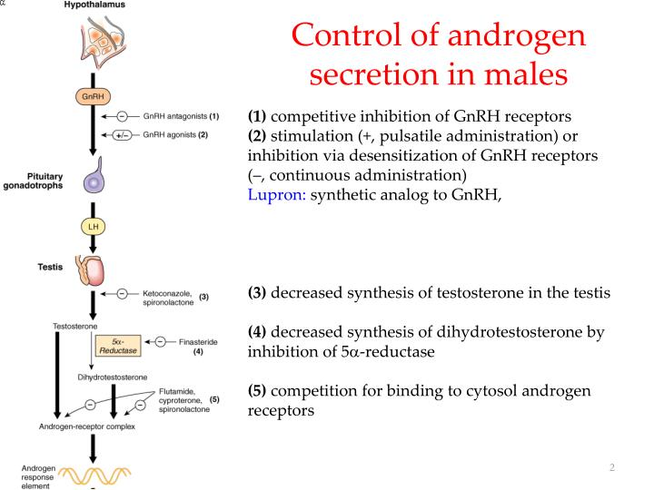 Control of androgen secretion in males