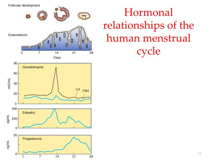 Hormonal relationships of the human menstrual cycle