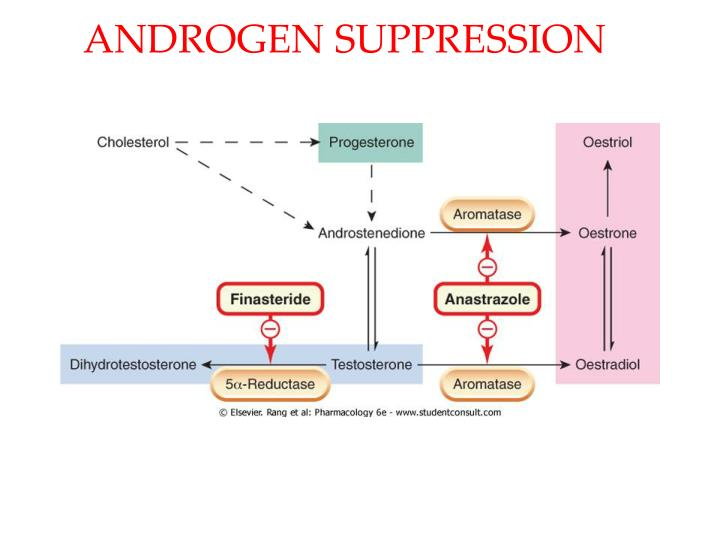 ANDROGEN SUPPRESSION