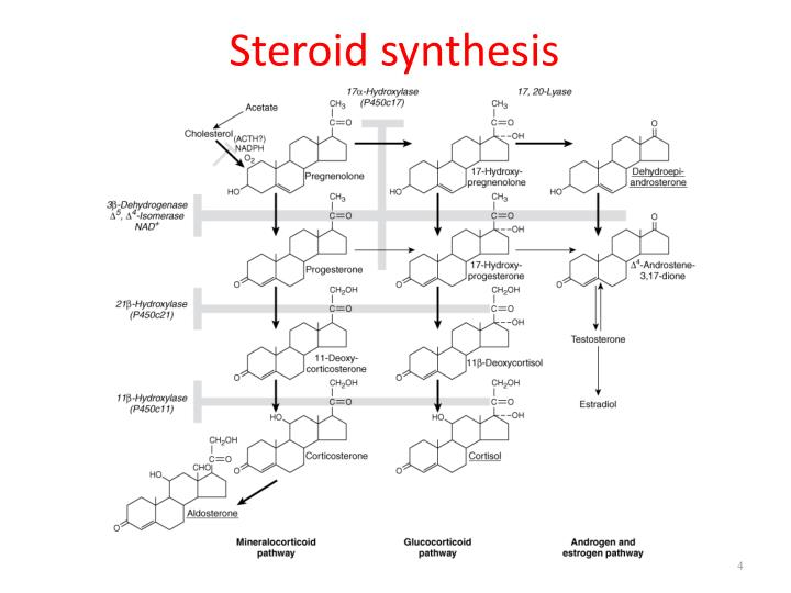 Steroid synthesis