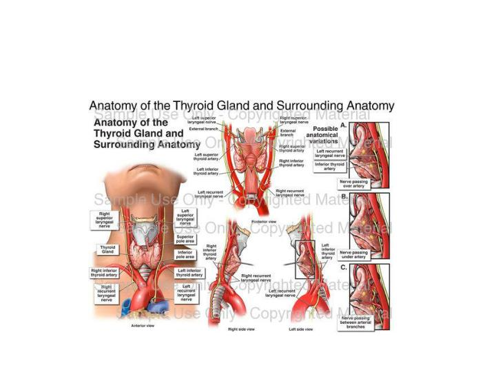 Enchanting Anatomy Of The Thyroid Gland And Surrounding Anatomy Mold