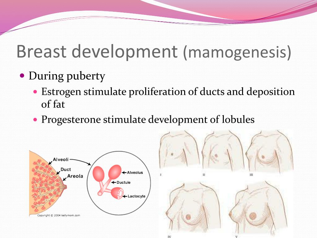 Ppt - Hormones Affecting The Breast Powerpoint -5466