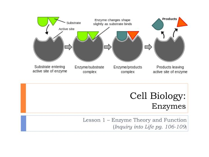 cell biology enzymes n.