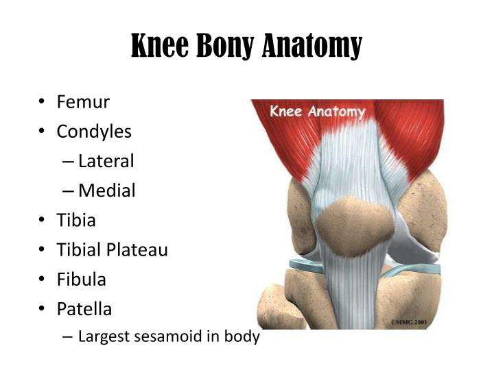 PPT - The Knee PowerPoint Presentation - ID:2139558
