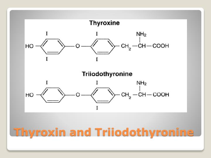 Thyroxin and
