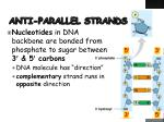anti parallel strands
