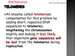 telomeres1