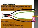 telomeres2