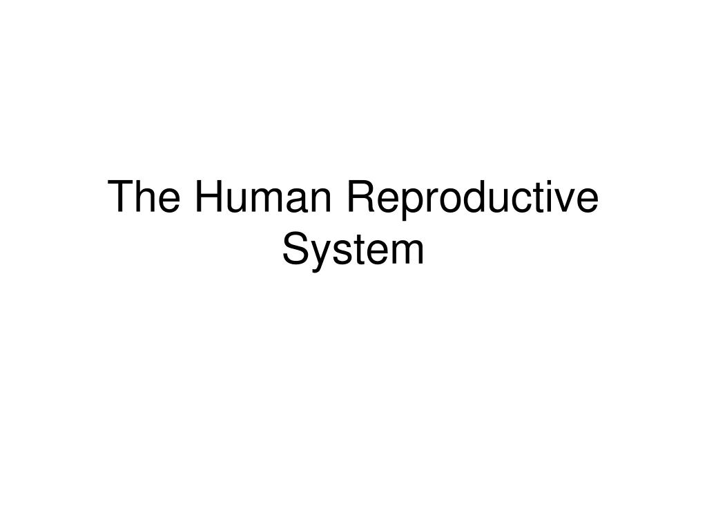 Ppt The Human Reproductive System Powerpoint Presentation Id2140314