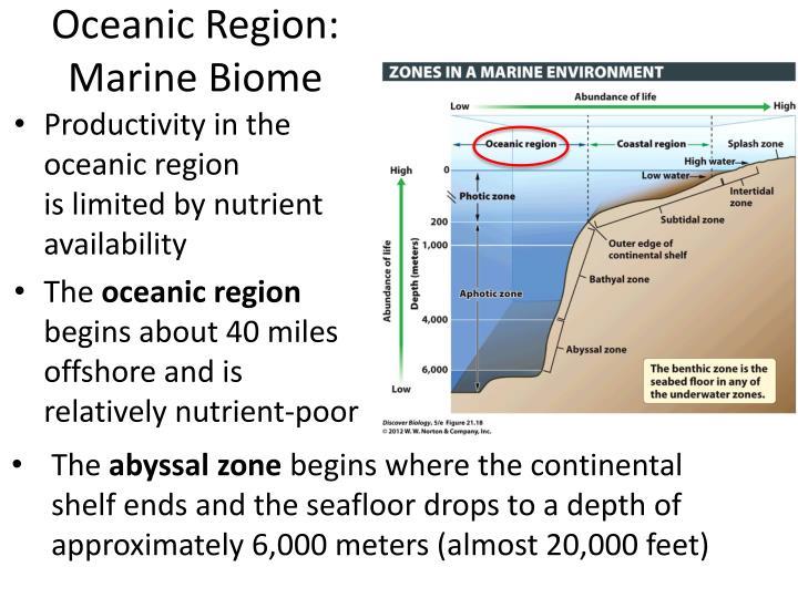 Oceanic Region: Marine Biome