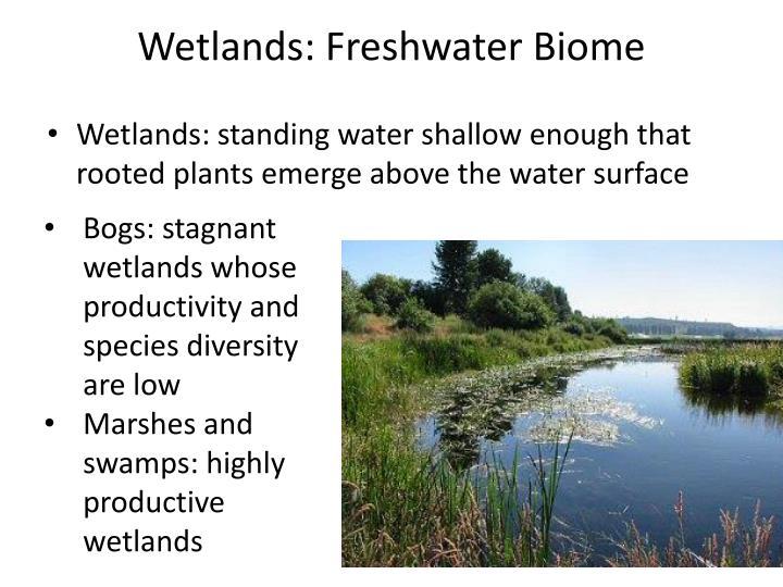 Wetlands: Freshwater Biome