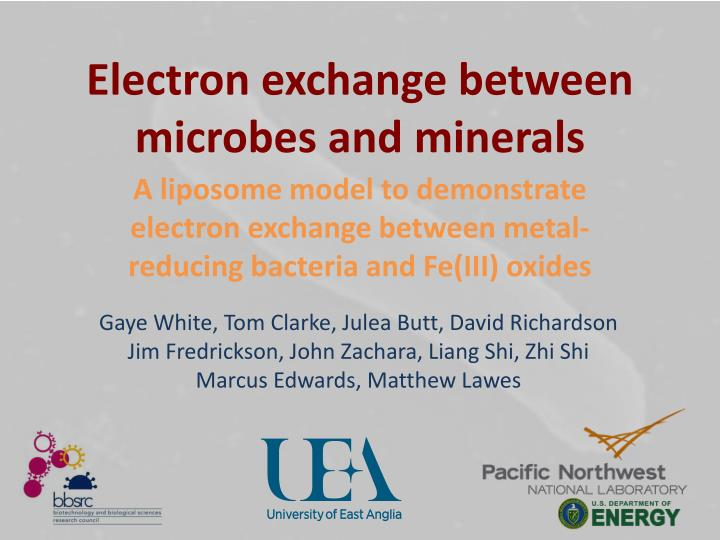 electron exchange between microbes and minerals n.