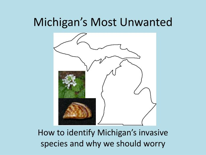 michigan s most unwanted n.