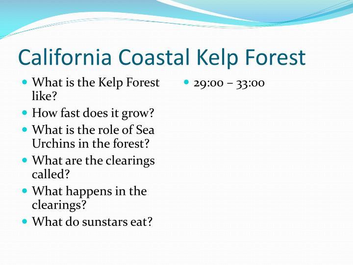California Coastal Kelp Forest