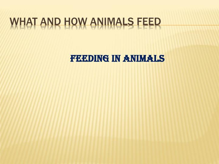 what and how animals feed n.