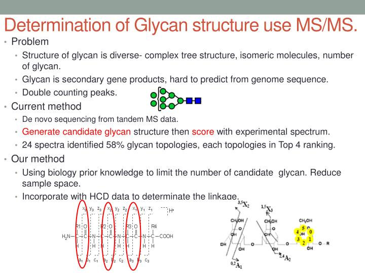 Determination of glycan structure use ms ms