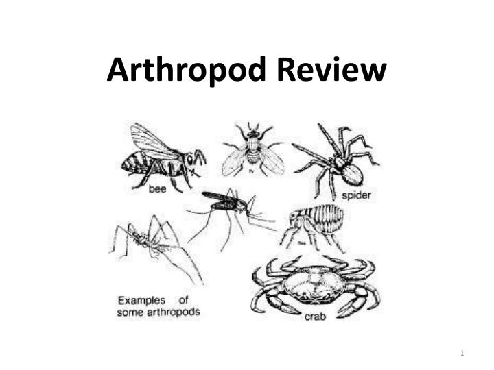 arthropod review