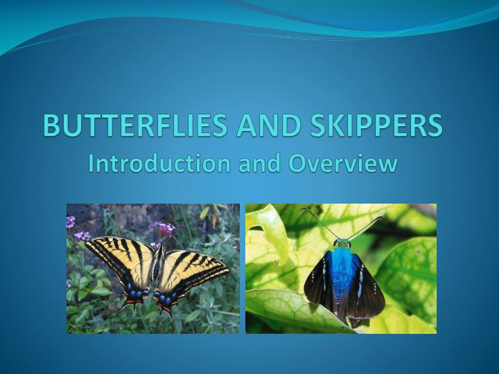 butterflies and skippers introduction and overview n.