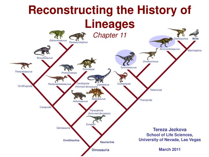 reconstructing the history of lineages n.