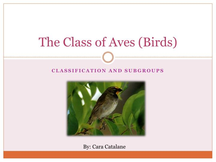 the class of aves birds n.