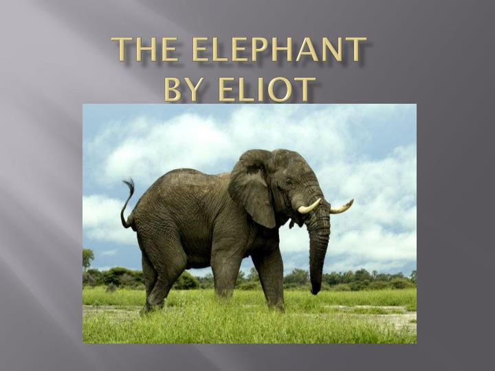 the elephant by eliot n.